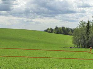 Как разделить земельный участок в натуре?